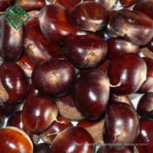 supply cheap eating Chinese fresh chestnuts
