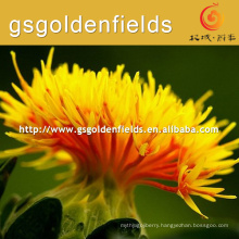 safflower flower safflower Manufacturer