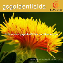 Производитель сафлорового цветок сафлора