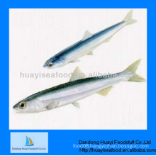 bottom price good service high quality frozen anchovy