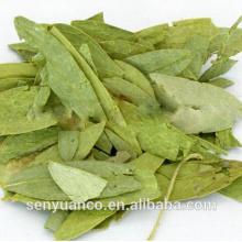 Высококачественный лист листьев сенны