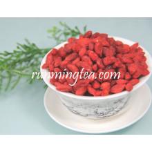 China Ningxia Orgânica Goji Berry