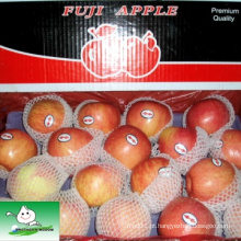 Shandong fuji apple