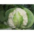 Новый оптом гибридные семена цветной капусты для оптовых продаж