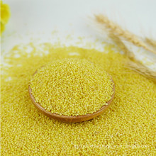 Good tast Yellow Millet hulled,dried for sale,millet price