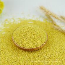 Bom gosto de painço amarelo descascado, seco para venda, preço de milho
