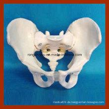 Leben Größe Männlich Erwachsene Becken Anatomisches Modell