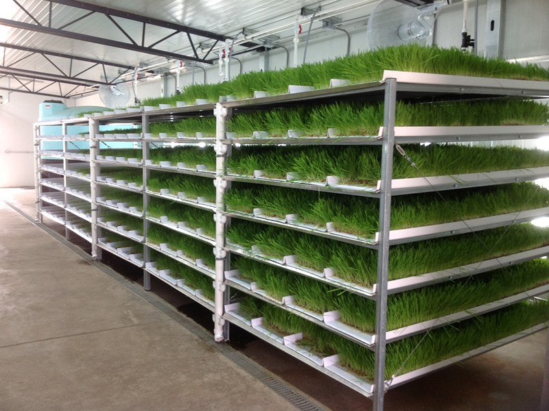 SK-Fodder ProFeed Growing System1