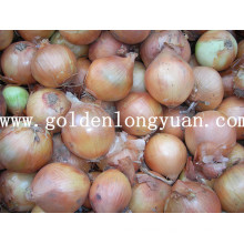 Fresh Yellow Onion Packed with Mesh Bag