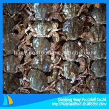 Nouvelle saison de crabe de boue verte congelée