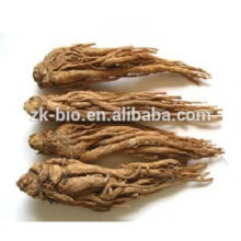 Traditional Chinese Medicine Angelica Extract Powder