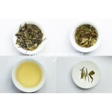 Fuding Organic White Peony White Tea