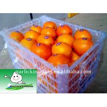 Fresh Navel Orange em uma cesta de plástico de 15kg