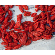 Regule la inmune chino goji berry