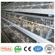 Automatic Galvanized Pullet Cages for Chicks