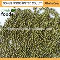 Горячей продажи высокое качество Спецификация зеленую фасоль
