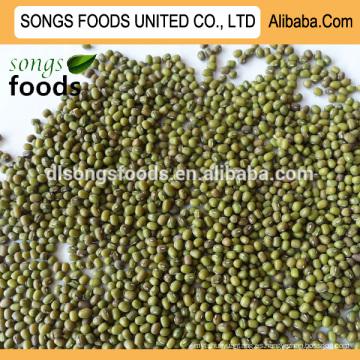 Venta caliente de alta calidad verde especificación de frijol mungo