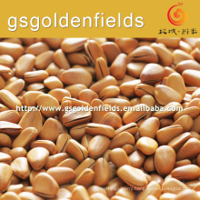 2017 hot sell natural wild pine nuts