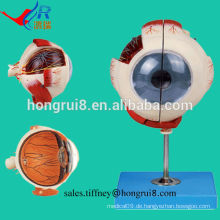 ISO Advanced Eyeball Modell, Anatomisches Augenmodell