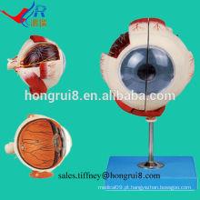 Modelo de globo ocular avançado ISO, modelo de olho anatômico
