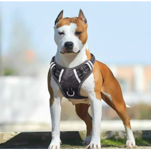 Big Large Dog Harness