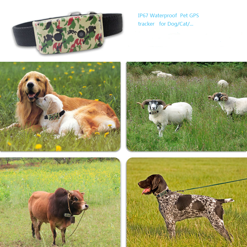 Pet Tracker Collar
