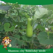 Suntoday международные названия овощей, где бутылка тыква выращивания сельскохозяйственных овощных продажа комбайн семена(16002)