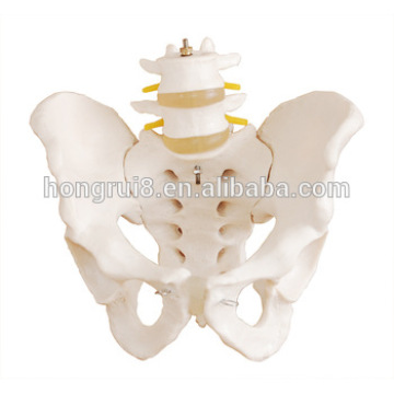 Modèle de pélvis humain avec modèle de verpebre lombaire 2pcs, modèle de plancher pelvien
