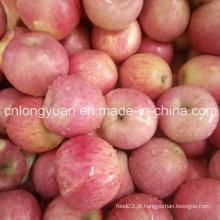 Fornecedor chinês para a alta qualidade de Apple fresco de Qinguan