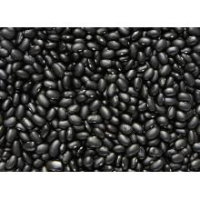 Exporter de la bonne qualité Fresh Chinese Black Bean