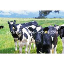 Étiquette plantée d'animaux utilisée à l'oreille pour la gestion
