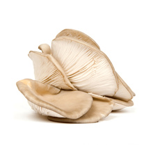 A/B/C/D bulk dried oyster mushroom