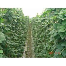Líquido fertilizante orgánico de aminoácidos