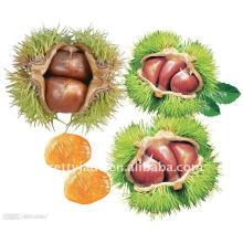 Supply Fresh Chestnut