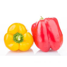 high quality yellow bell pepper colorful pepper on sale red bell pepper