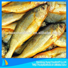 supply kinds of high quality frozen yellow croaker