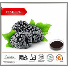 100% Pure Mulberry Fruit Extract Antocianina 5-25%