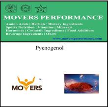 Lowest Price Top Quality Pycnogenol