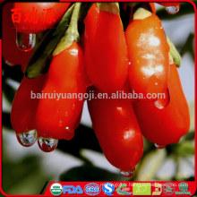 Ningxia original séché baies de goji baies de goji barbary goji fruits loisirs collations