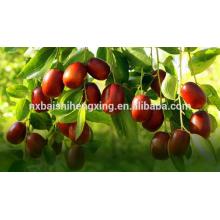 Jujube vermelho vermelho datas frutas secas baratas