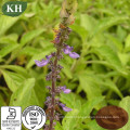 High Quality Coleus Forskohlii Extract Forskolin 20%