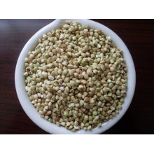 Chinese Buckwheat Kernels Yulin Origin