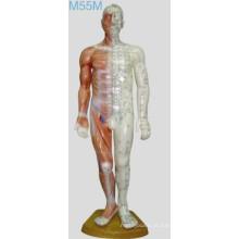 Acupuntura Modelo Humano 60cm
