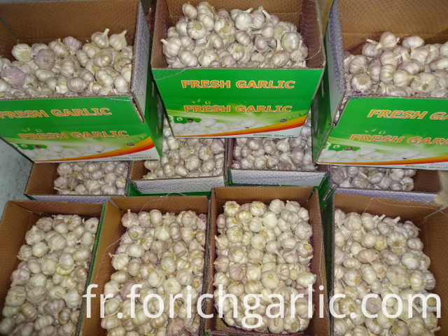 Normal Garlic Exporter