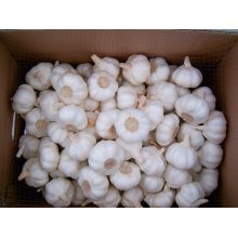 High quality white garlic