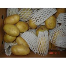 Patata fresca de Holanda nueva