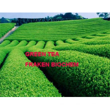 High Quality 40-98% Polyphenols 30-98% EGCG Green Tea Extract