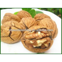 HACCP ;ISO Chinese Best Quality Walnut