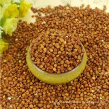 Red Sorghum With High Quality And Cooperate Price From China