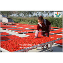 FRESH FRESH BARU! BULK DRIED GOJI BERRIES